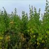 Alternativen bei der Produktion von Biogas?
