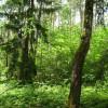 Ökologischer Umbau im Stadtwald