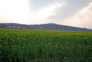 Bald blühen hier keine Wiesen mehr - Oberfürberg am Fürther Stadtwald (Foto: Werner Schmidt)