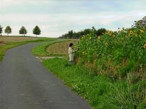 Wildpflanzenfeld (Foto: Alfred Schermann)