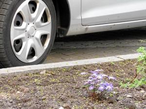 mit Blumen gegen Blechästhetik (Foto: Ralph Stenzel)