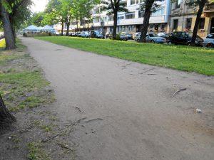 Baumschäden an der Willy-Brandt-Anlage (Foto: Susanne Krebs)